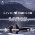 velryby, kosatky, norsko lofoty, vikingové, vikings, vigings of norway